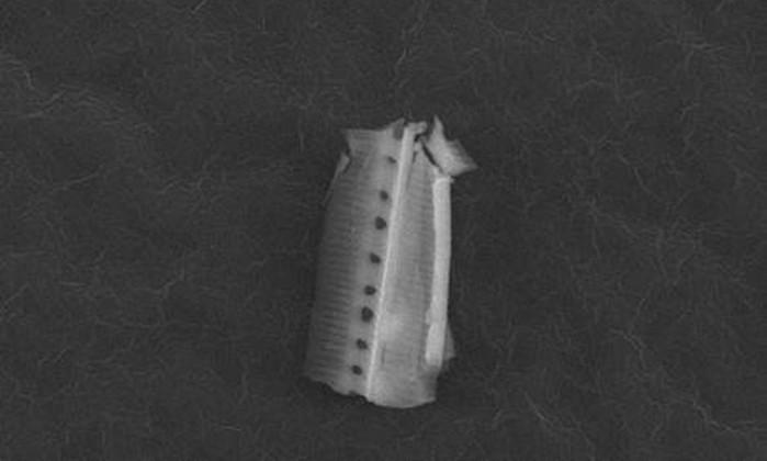 organismo-capturado-pelos-pesquisadores
